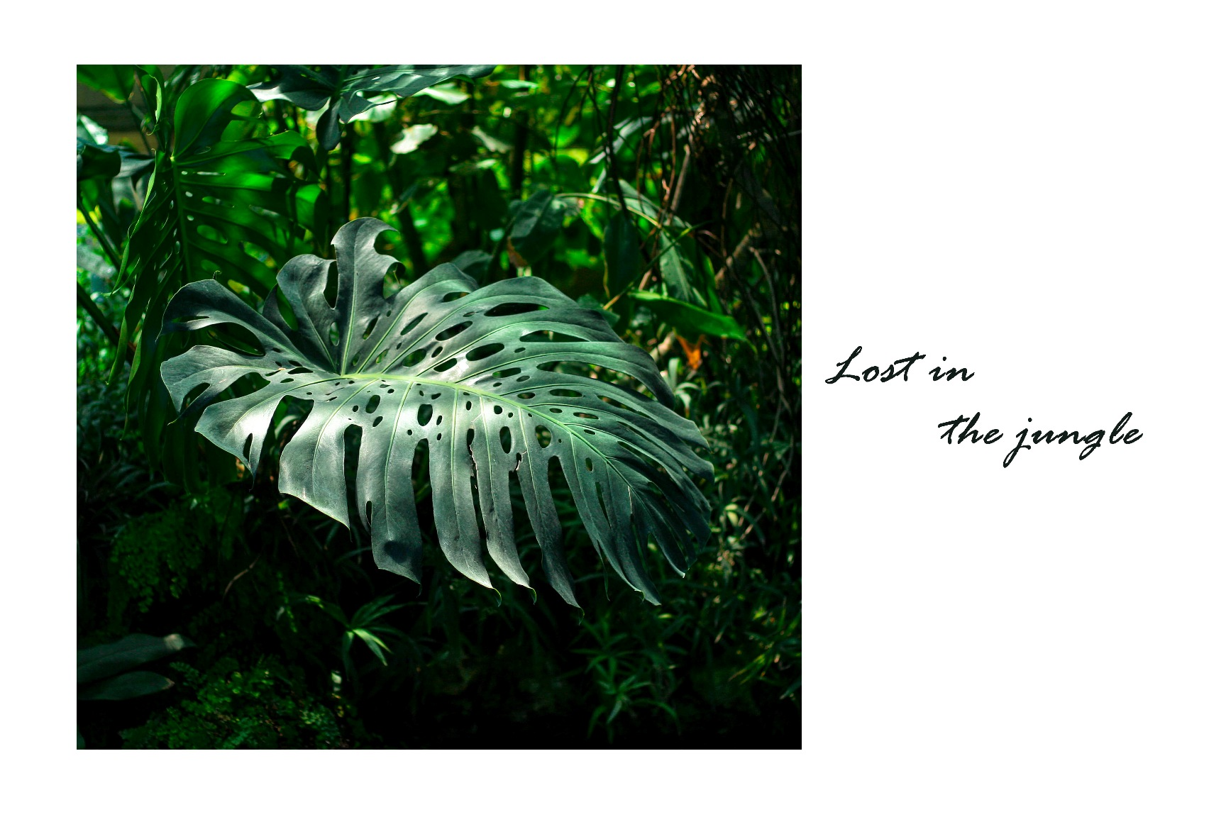 lost in the jungle_the taste of violet